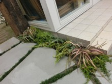 A様邸・A様店舗の外構工事5 様々な植栽