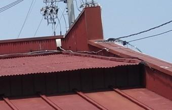 波板と瓦棒葺きの片流れ屋根の段差部分。