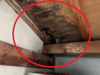 桑名市で屋根の雨漏り点検は街の屋根やさんにお任せ