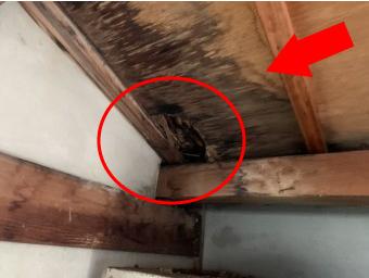 駐車場兼物置の雨漏り箇所の雨漏り点検【室内雨漏り点検】